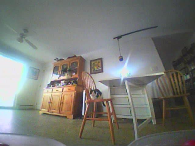 CatSlaps, PICT0015_1 GIFs