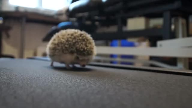 Watch and share Hedgehogifs GIFs and Tippytaps GIFs on Gfycat
