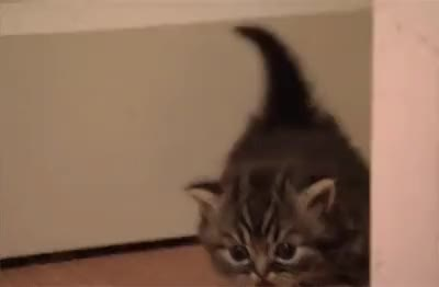 Watch this adorable GIF on Gfycat. Discover more adorable, kitten GIFs on Gfycat