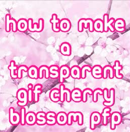 Watch and share Blossom GIFs on Gfycat