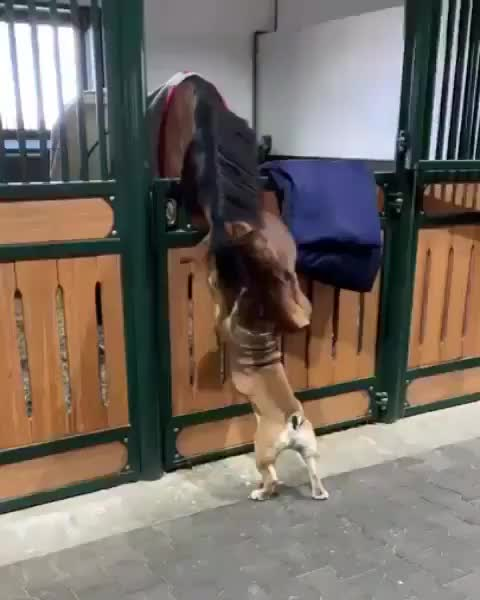 Horse has endless patience for their new friend GIFs