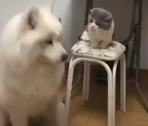 Pupper just wants to be friends GIFs