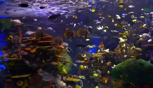 Watch and share The Best 4K Aquarium For Relaxation GIFs on Gfycat