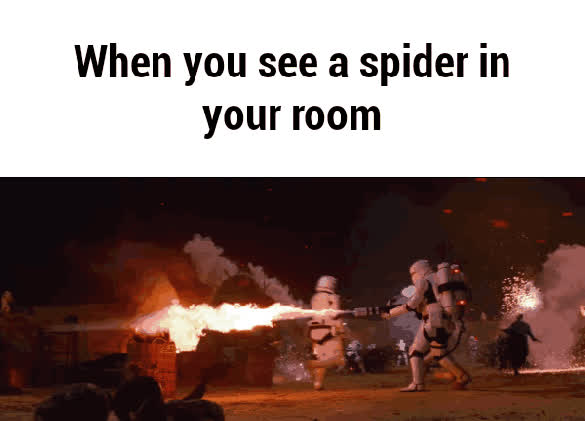 spiders 4 GIFs