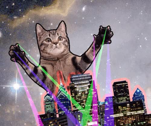 Watch and share Cat Laser GIFs on Gfycat