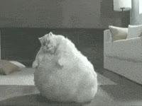 Watch and share Fat, Cat, Funny, Bounce, Wiggle GIFs on Gfycat