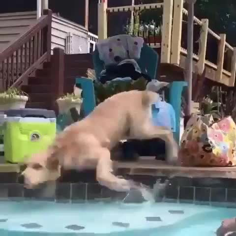 Water doggo gif