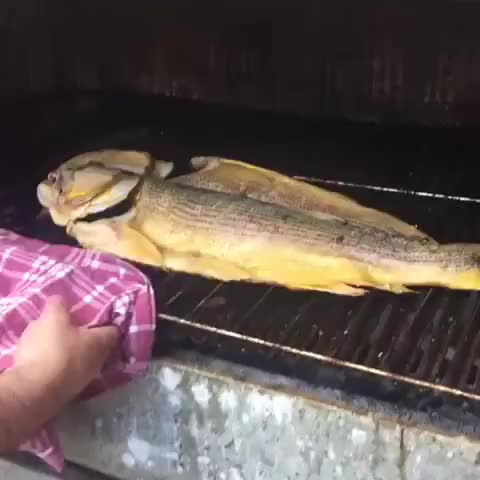 Watch Grilled fish GIF by O-shi (@shishi) on Gfycat. Discover more related GIFs on Gfycat