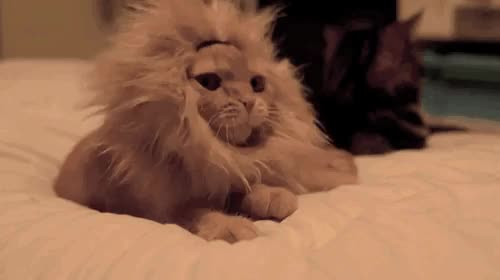 Watch this lion GIF by The GIF Smith (@sannahparker) on Gfycat. Discover more animals, awww, cat, cub, cute, kitty, lion, lioness, lions, sleepy, yawn GIFs on Gfycat