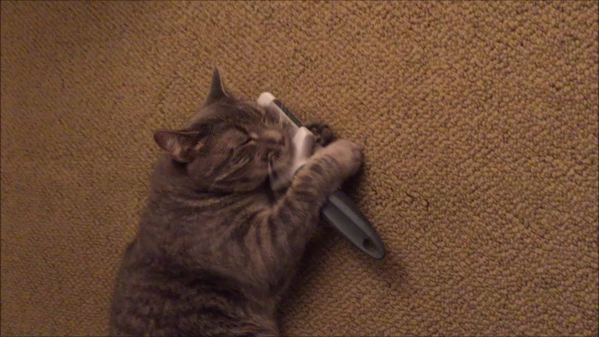 brushybrushy, cats, My cat likes to brush herself GIFs