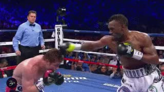 Watch Canelo Trout GIF by @rath on Gfycat. Discover more related GIFs on Gfycat