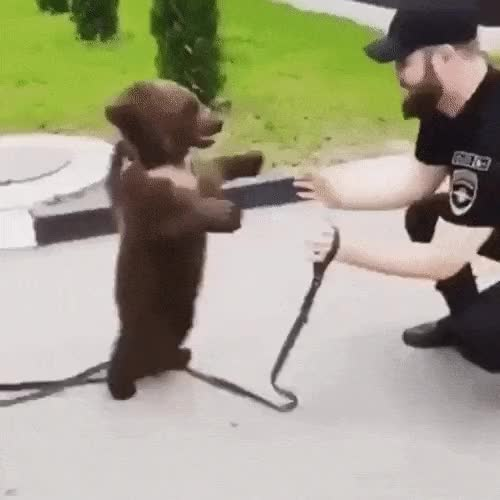 Watch and share Lemme Go Hooman GIFs on Gfycat