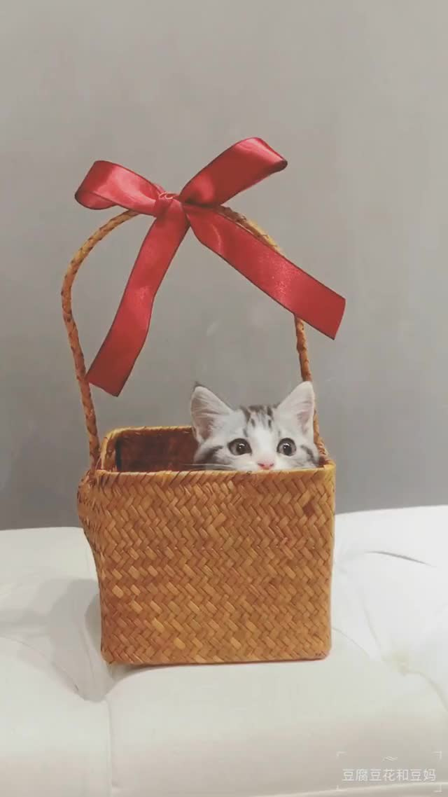 Watch and share Cute Cat Gift GIFs on Gfycat