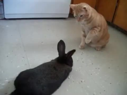 Watch Bunny boop GIF on Gfycat. Discover more AnimalsBeingJerks, animalsbeingjerks GIFs on Gfycat