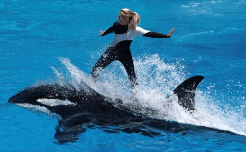 Watch and share Seaworld GIFs on Gfycat