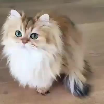 Watch and share Cute Kitten GIFs by Funny Cats! on Gfycat
