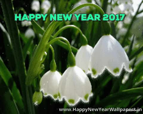 Watch and share Blooming Flower Animated Ecards For Happy New Year GIFs on Gfycat