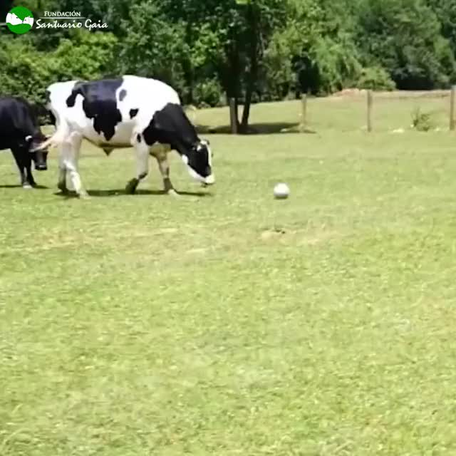Watch and share Grass Puppy. 😍  GIFs on Gfycat