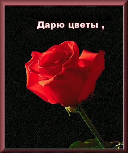 Watch and share 8 Марта Международный Женский День GIFs on Gfycat