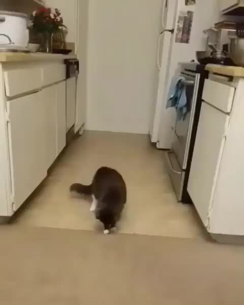 cats, Cat can't figure out a piece of carpet fuzz GIFs