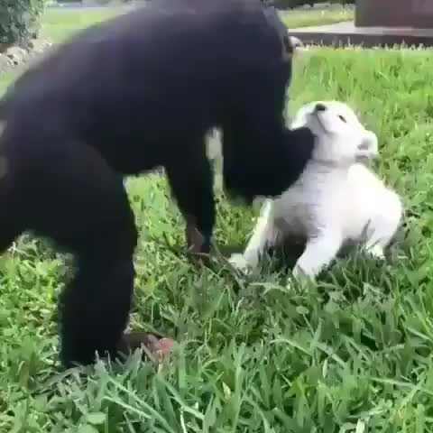 adorable, animals, baby, baby animals, babyanimals, cute, cuteoverload, dogs, pets, Just a pair of besties GIFs
