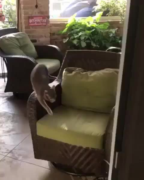 Watch and share Cat GIFs by nyctilaur on Gfycat
