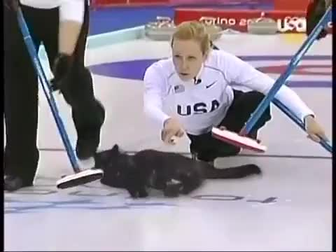 Watch and share Cat Curling GIFs on Gfycat