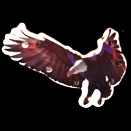 Watch and share Flying Eagle Flashing Body Light Lapel Pins | All Body Lights And Blinkees GIFs on Gfycat
