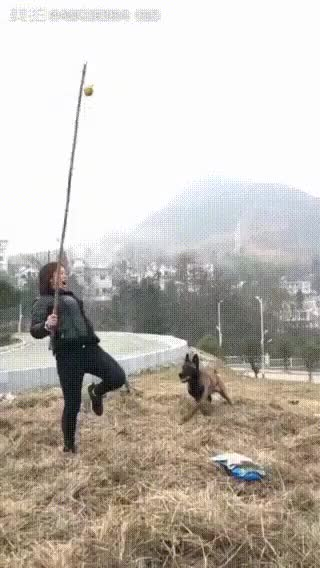 Watch and share This Dog Jumps.. GIFs by likkaon on Gfycat