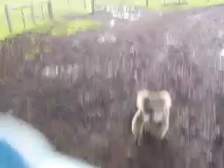 animalsbeingjerks, Koala attacks a 4-wheeler rider (reddit) GIFs