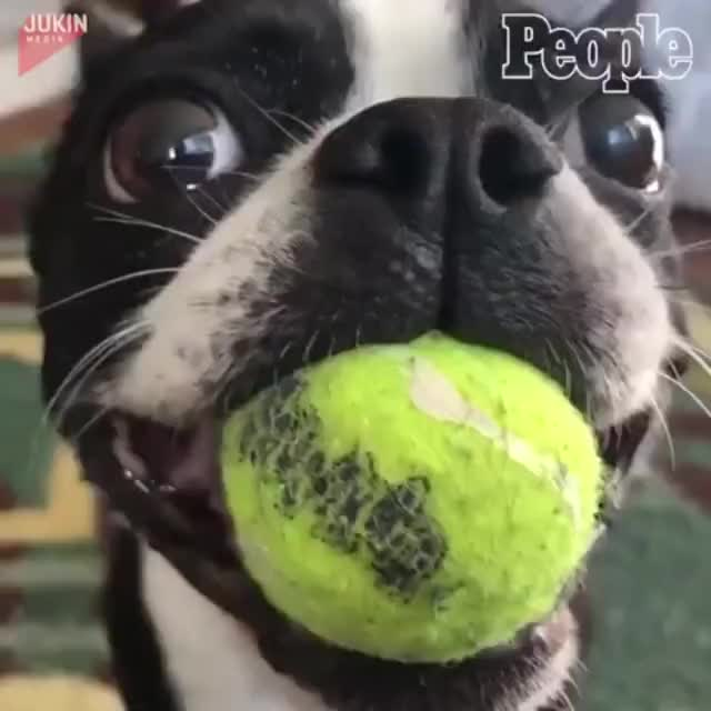 Watch and share Good Boy Playing By Himself GIFs on Gfycat