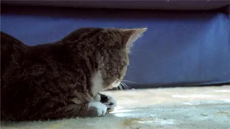 Watch and share Surprised Cat Funny Lol Hilarious GIFs on Gfycat