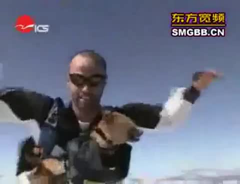 skydiving dog, Skydiving Dog GIFs