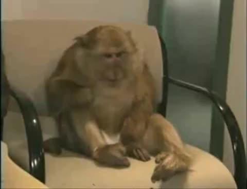 Sneezing Monkey GIFs