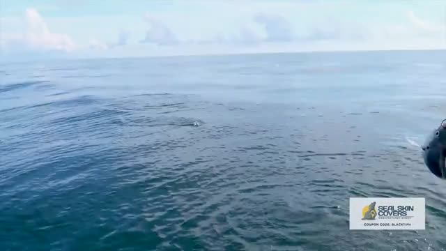 Watch and share Freshwater GIFs and Saltwater GIFs on Gfycat