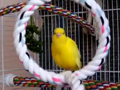 Watch and share Canary GIFs on Gfycat