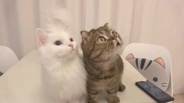Watch and share 발올리지먀! GIFs on Gfycat