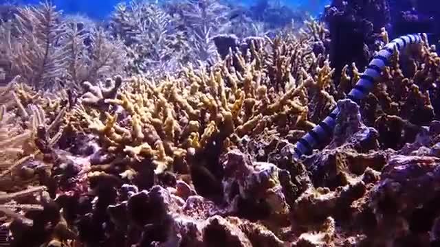 Watch and share Sea Snake GIFs and Boracay GIFs by likkaon on Gfycat