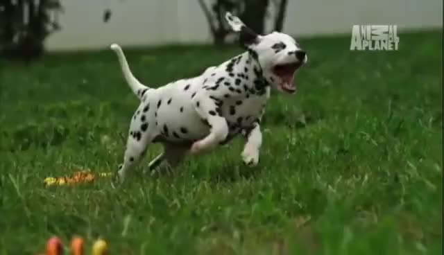Watch and share Animal Planet GIFs and Slow Motion GIFs on Gfycat