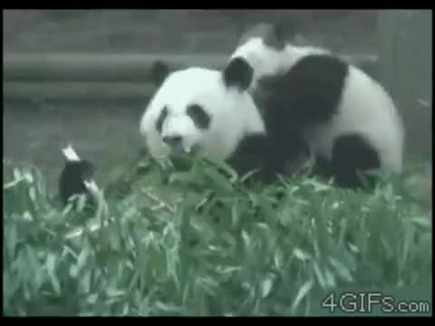 Watch and share more GIFs by invalid_username- on Gfycat