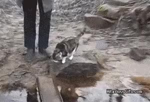 Watch and share Being Careful! GIFs on Gfycat