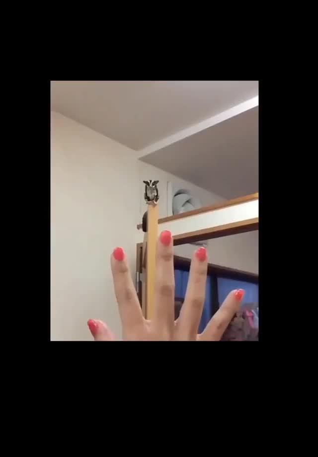 Watch and share Sugar Glider Is 🔥🔥🔥🔥 (reddit) GIFs on Gfycat
