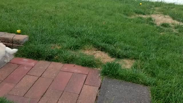 Watch and share Zoomies GIFs by fuzzusmaximus on Gfycat