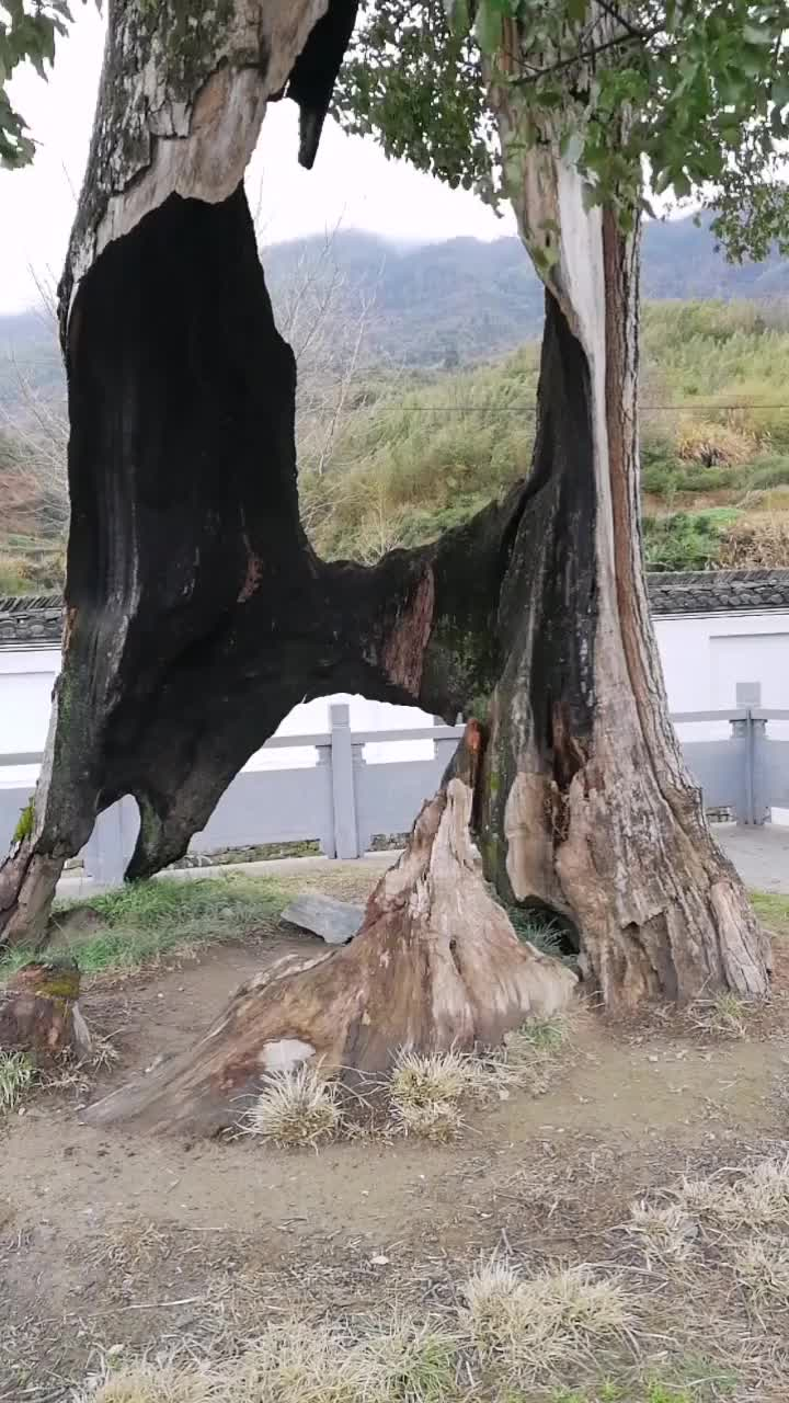 A magic tree GIFs