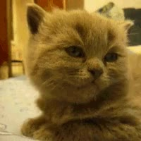 Watch this zzz GIF on Gfycat. Discover more related GIFs on Gfycat