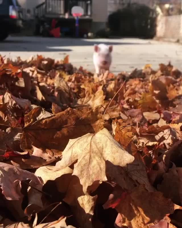 Watch and share Autumn GIFs and Leaves GIFs by lnfinity on Gfycat