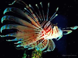 Watch and share Морские И Океанские Рыбки. GIFs on Gfycat