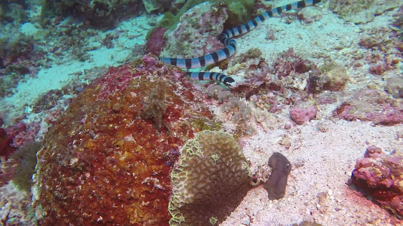 sea snake, snek GIFs