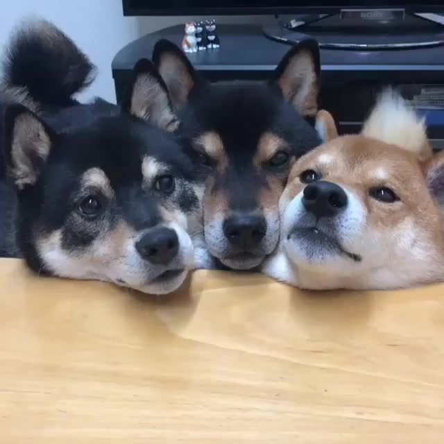 Watch and share Puppies GIFs by Ronj75 on Gfycat