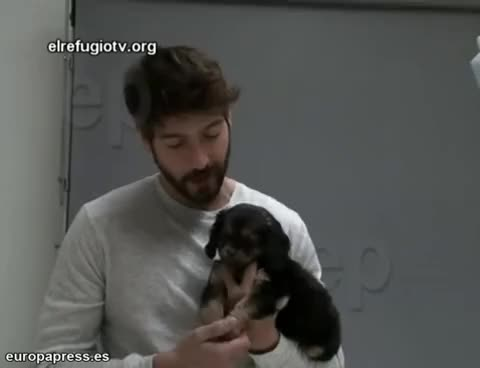 Watch Puppy GIF on Gfycat. Discover more felix, gomez, photoshoot, puppy GIFs on Gfycat